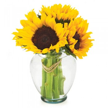 Simply Sunflowers at Alamo Heights Flowers and More