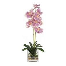 Phalaenopsis Orchid in Pink at Alamo Heights Flowers and More