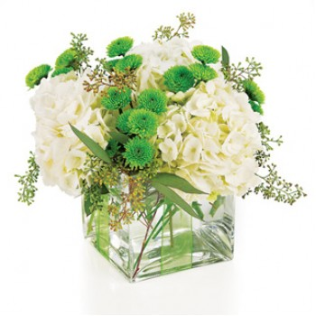Hydrangea dreams in white at Alamo Heights Flowers and More