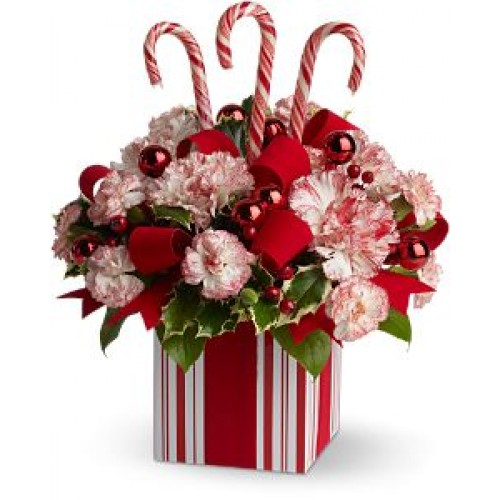 Christmas Present Perfect by Alamo Heights Flowers and More