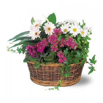 Traditional European Garden Basket by Alamo Heights Flowers and More