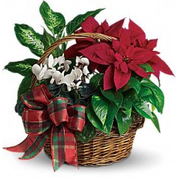 Holiday Homecoming Basket  by Alamo Heights Flowers and More