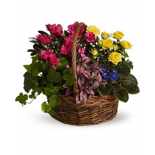 Blooming Garden Basket by Alamo Heights Flowers and More