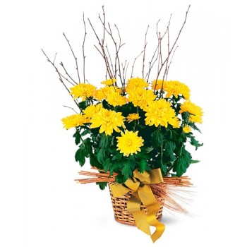 Yellow Hope Chrysanthemum by Alamo Heights Flowers and More