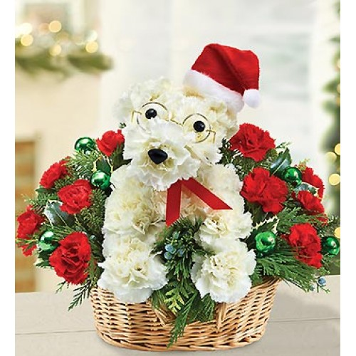 Santa Paws by Alamo Heights Flowers and More